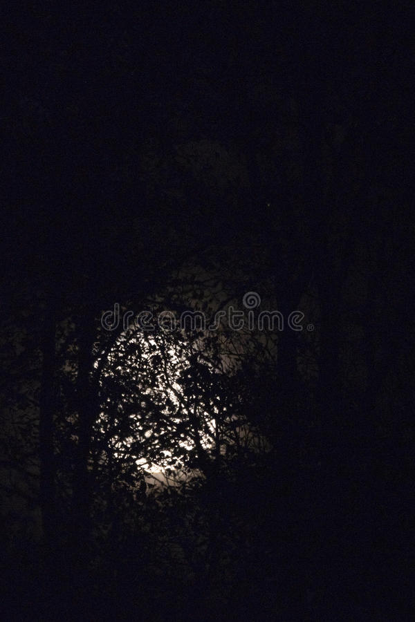Full moon behind naked tree branches and twigs in night royalty free stock photos