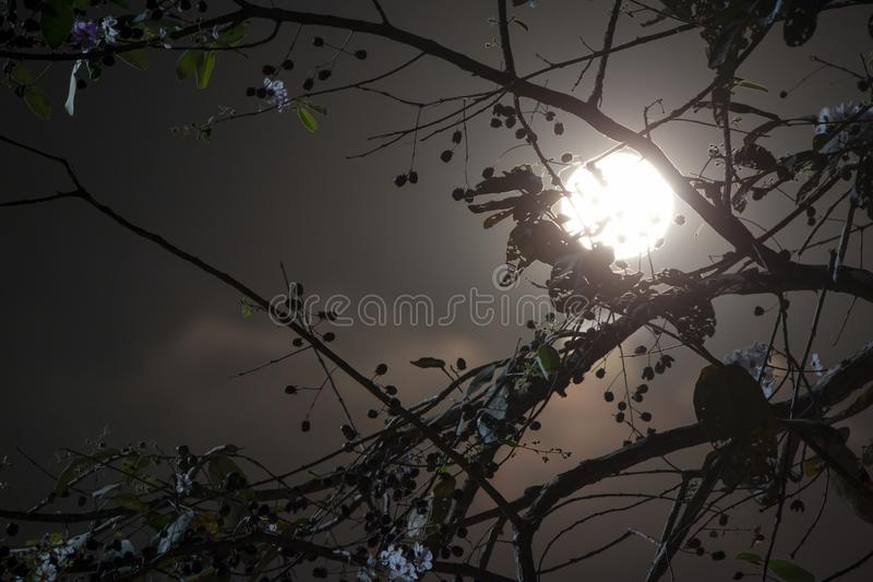 The full moon is behind the silhouette of the tree. royalty free stock photos