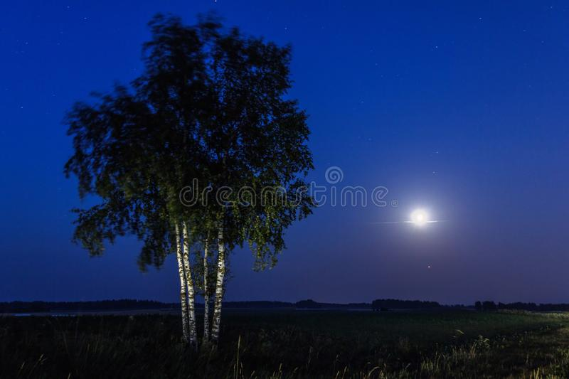 Full moon and birch trees. During the starry night stock photos