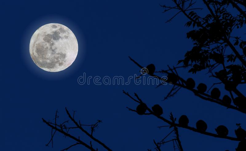 Full moon and blue sky. royalty free stock image