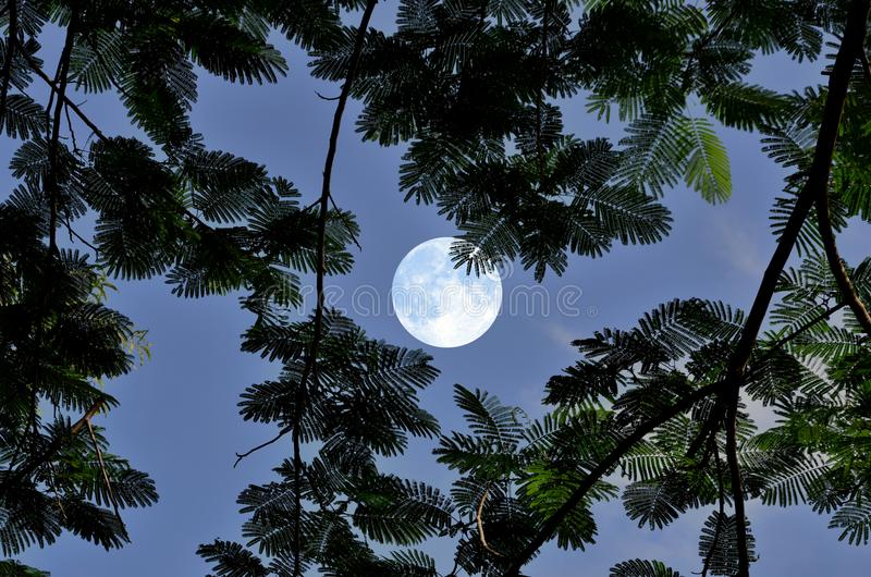Full moon in blue sky with leaves at night royalty free stock image