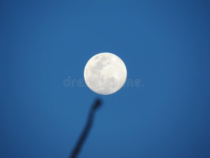 Full moon in daytime with shadow of tree branches. Against the b. Lue sky background royalty free stock images