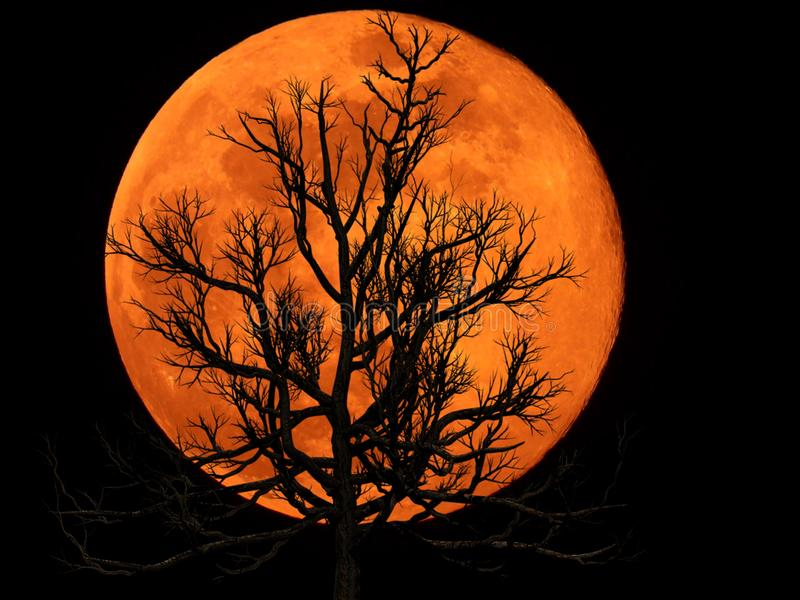 Full Moon with Dead Plant. Full moon with silhouette of Dead Plant royalty free stock images