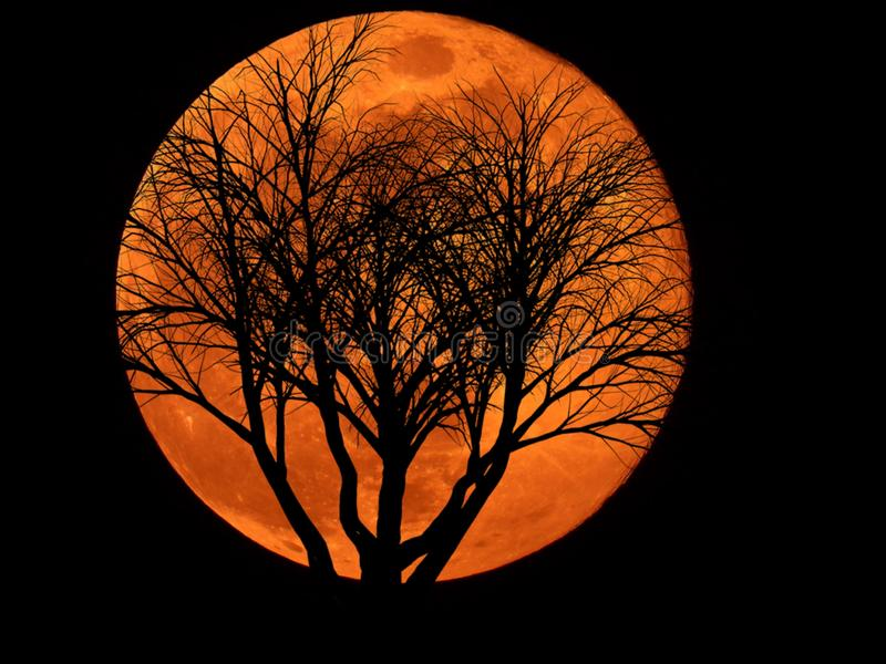 Full Moon with Dead Plant. Full moon with silhouette of Dead Plant stock photo
