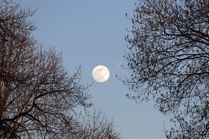 Full moon at dusk stock image
