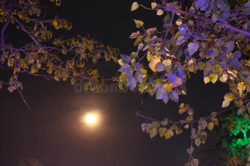 A full moon emits light in the night sky. Moonlight shines through the branches of a tree.  stock photos