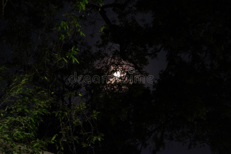 A full moon emits light in the night sky. Moonlight shines through the branches of a tree.  stock photo