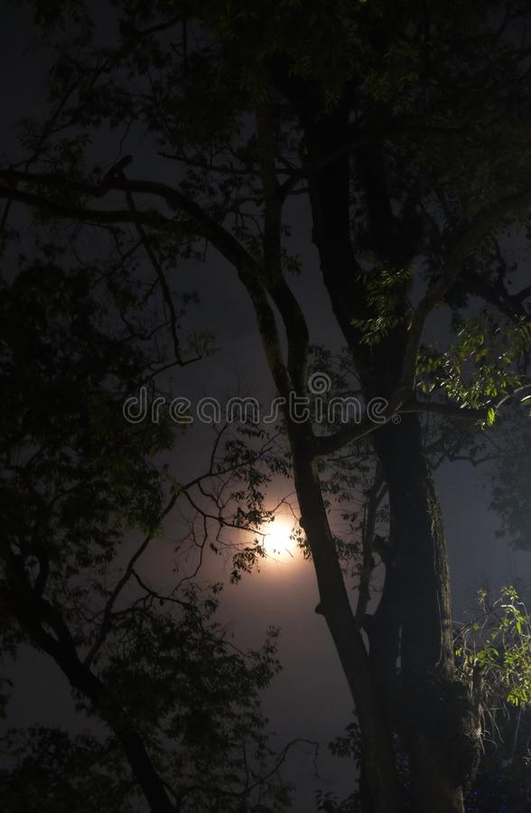 A full moon emits light in the night sky. Moonlight shines through the branches of a tree.  royalty free stock photos