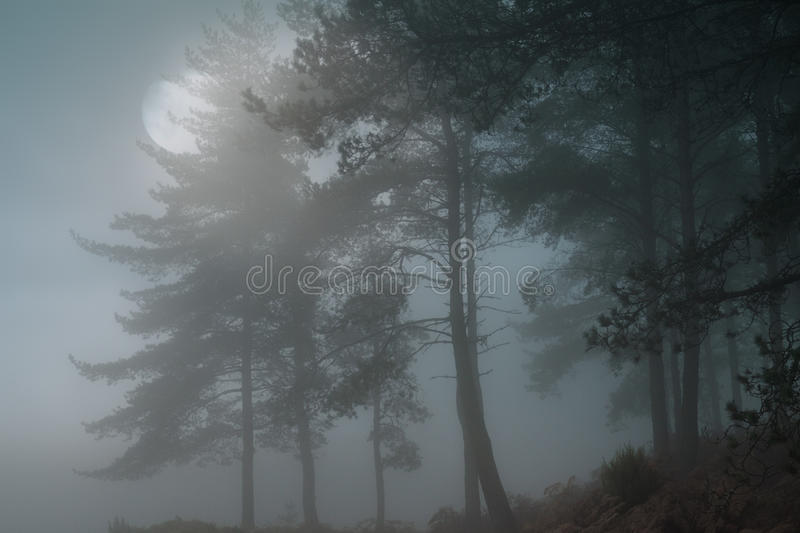 Full moon forest stock images