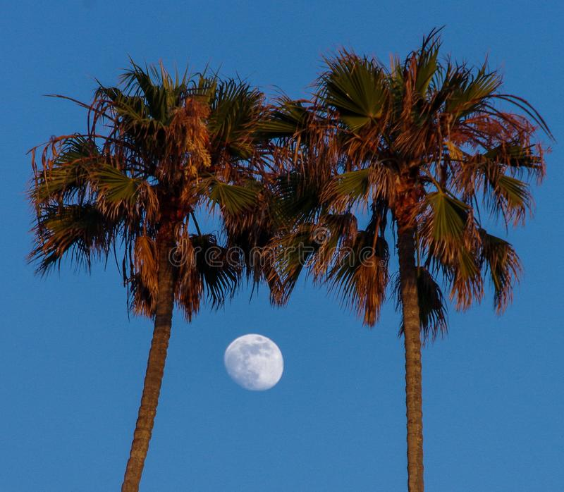 An almost full moon framed by two palm trees stock photos