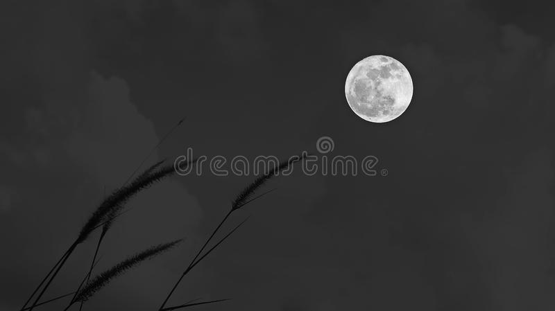 Full moon and grass flower in the dark of night background. Full moon and grass flower - background royalty free stock photos