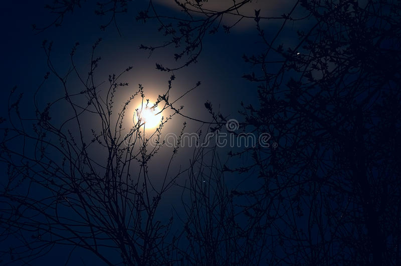 Full moon in May - full moon in the night sky and silhouettes of royalty free stock photo