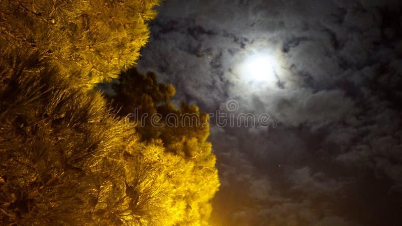 Full moon mystic night in park stock photos