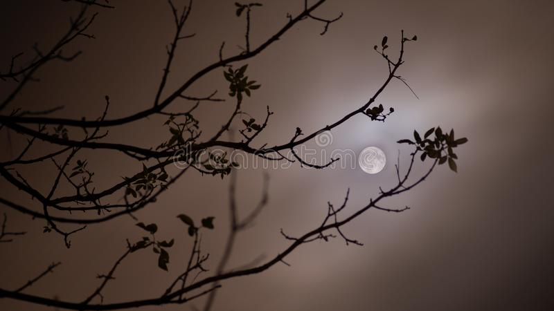 Full moon night. Silhouette of branches against full moon stock photos
