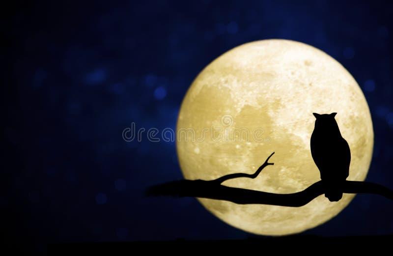 Full moon in the night sky royalty free stock photo