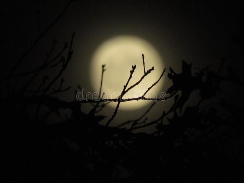 Moon branches stock image