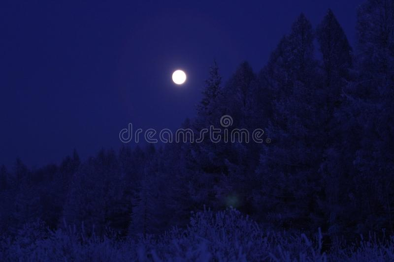 Full moon over the forest stock photography