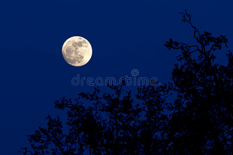 Full moon over forest royalty free stock photo