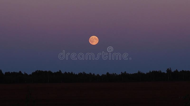 Moon rise over forest royalty free stock photography