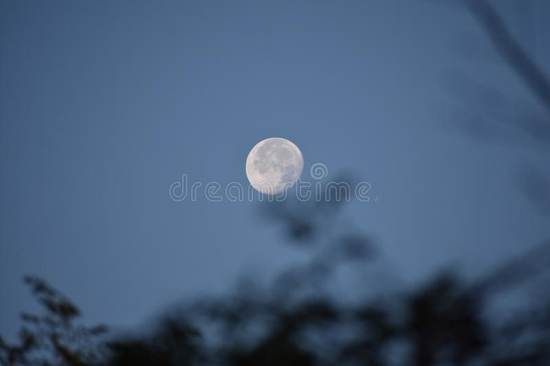 Full Moon over the trees. Early evening is a type of mystery and magic. Nothing is more magical than a full moon. On a summer night, the moon seems close to the royalty free stock photo