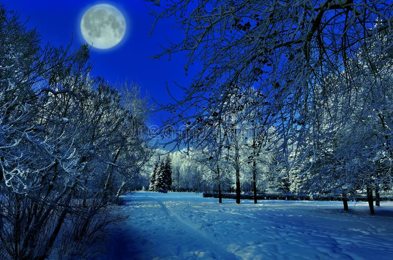 Full moon over winter park - beautiful night landscape stock images