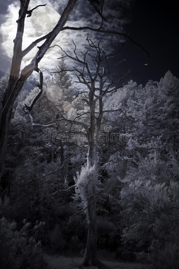 Moon rising over a forest stock photos