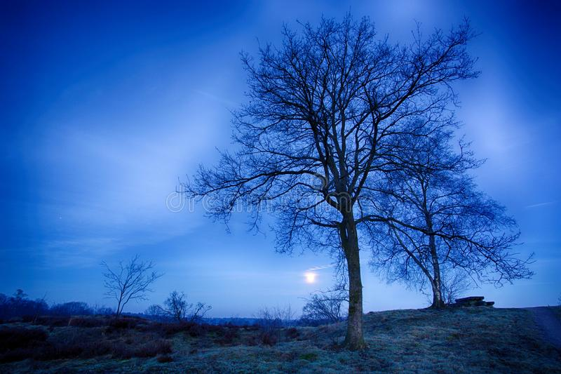 Full moon rising. Full moon in a radiant blue sky framed against the bare trees and heather fields