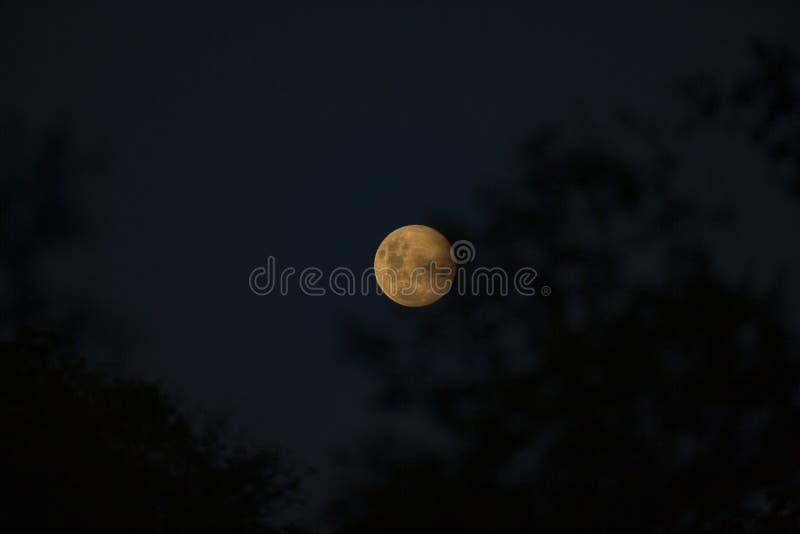 A full moon rising with vivid colours. A vivid full moon rising with a warm colour tone royalty free stock photos