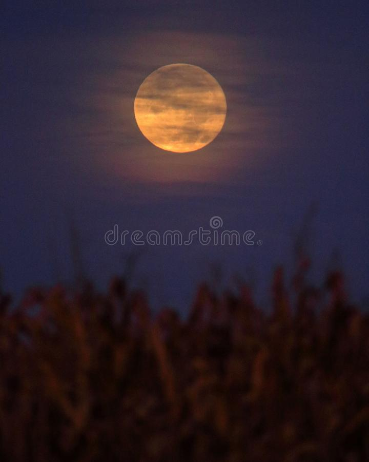 Harvest Moon royalty free stock photos