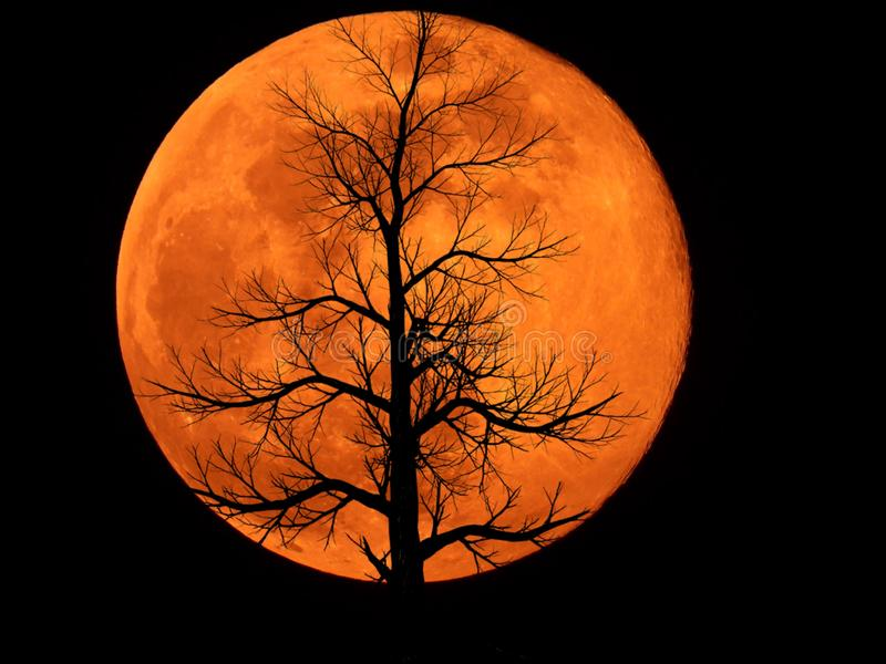 Full Moon with Dead Plant. Full moon with silhouette of Dead Plant stock images