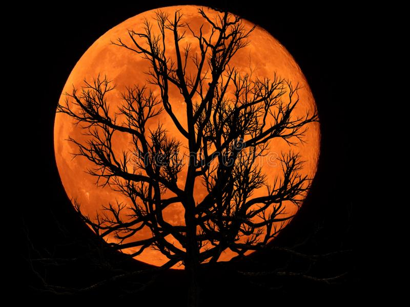 Full Moon with Dead Plant. Full moon with silhouette of Dead Plant stock photography