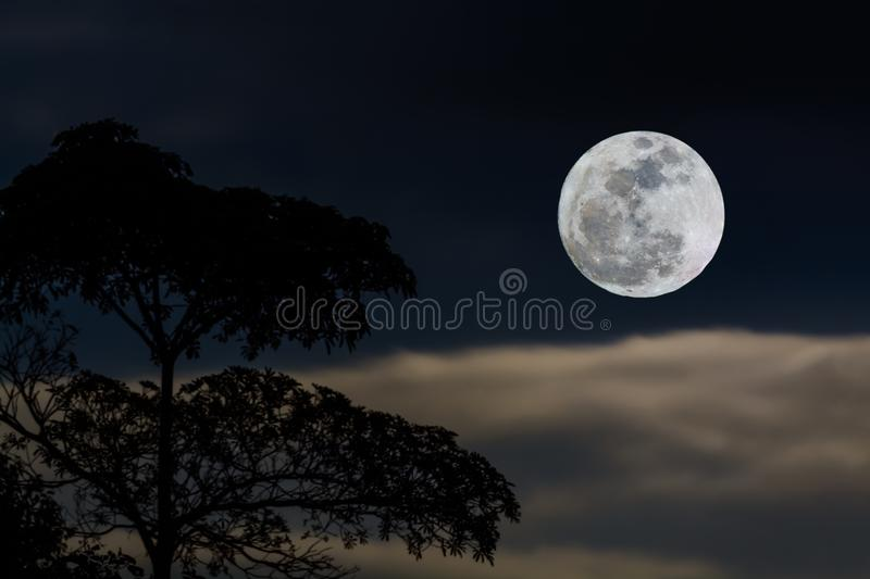 Full moon in sky. stock images