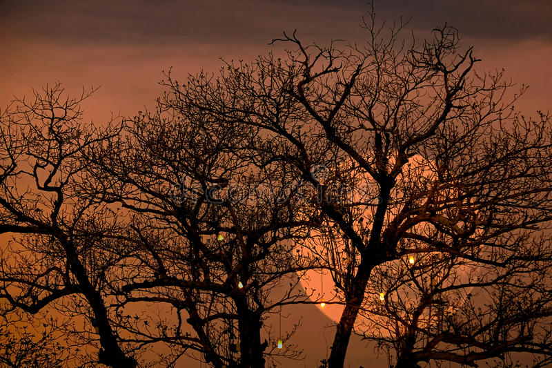 Full moon with spooky tree branches background.  stock photography