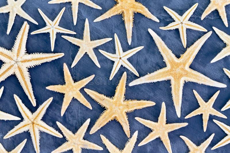 Full rambakgrund av den torkade sjöstjärnan royaltyfria foton