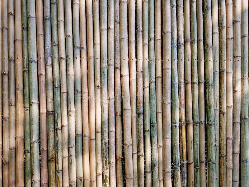 Full rambakgrund av den traditionella bambupinneväggen royaltyfria foton