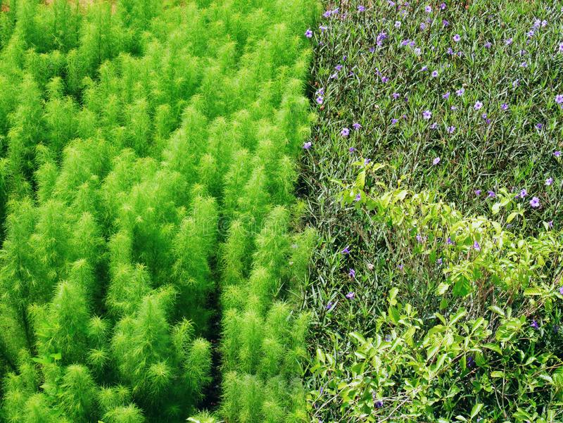 Full rambakgrund av olika sorter av fältet för blomningväxt arkivbilder
