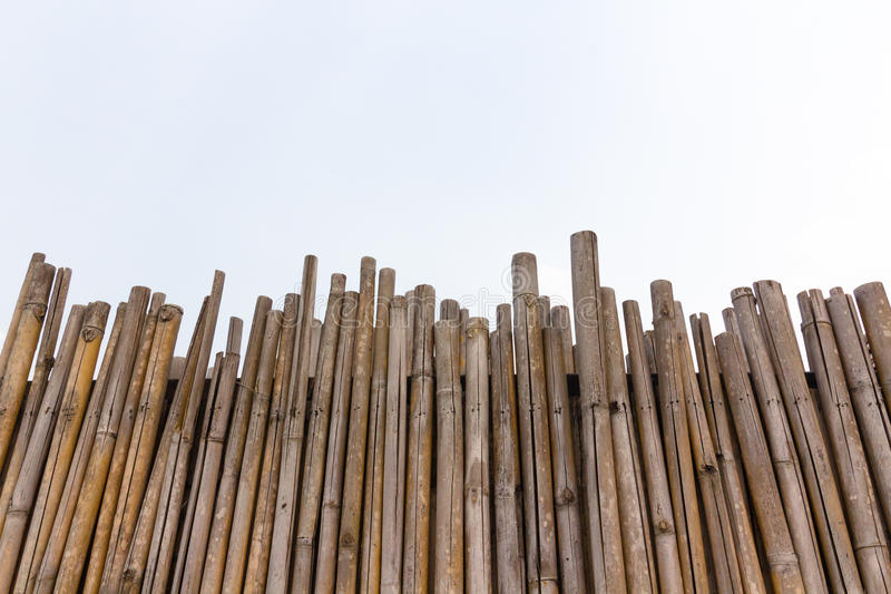 Full rambild av bambu fotografering för bildbyråer