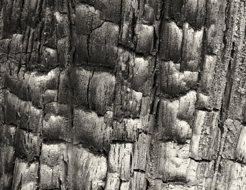 Full rambild av svart bränt till kol bränt trä med skinande texturerat korn royaltyfri bild