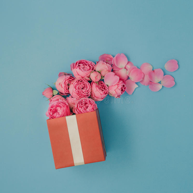 Full red gift box of pink roses on blue background stock photo