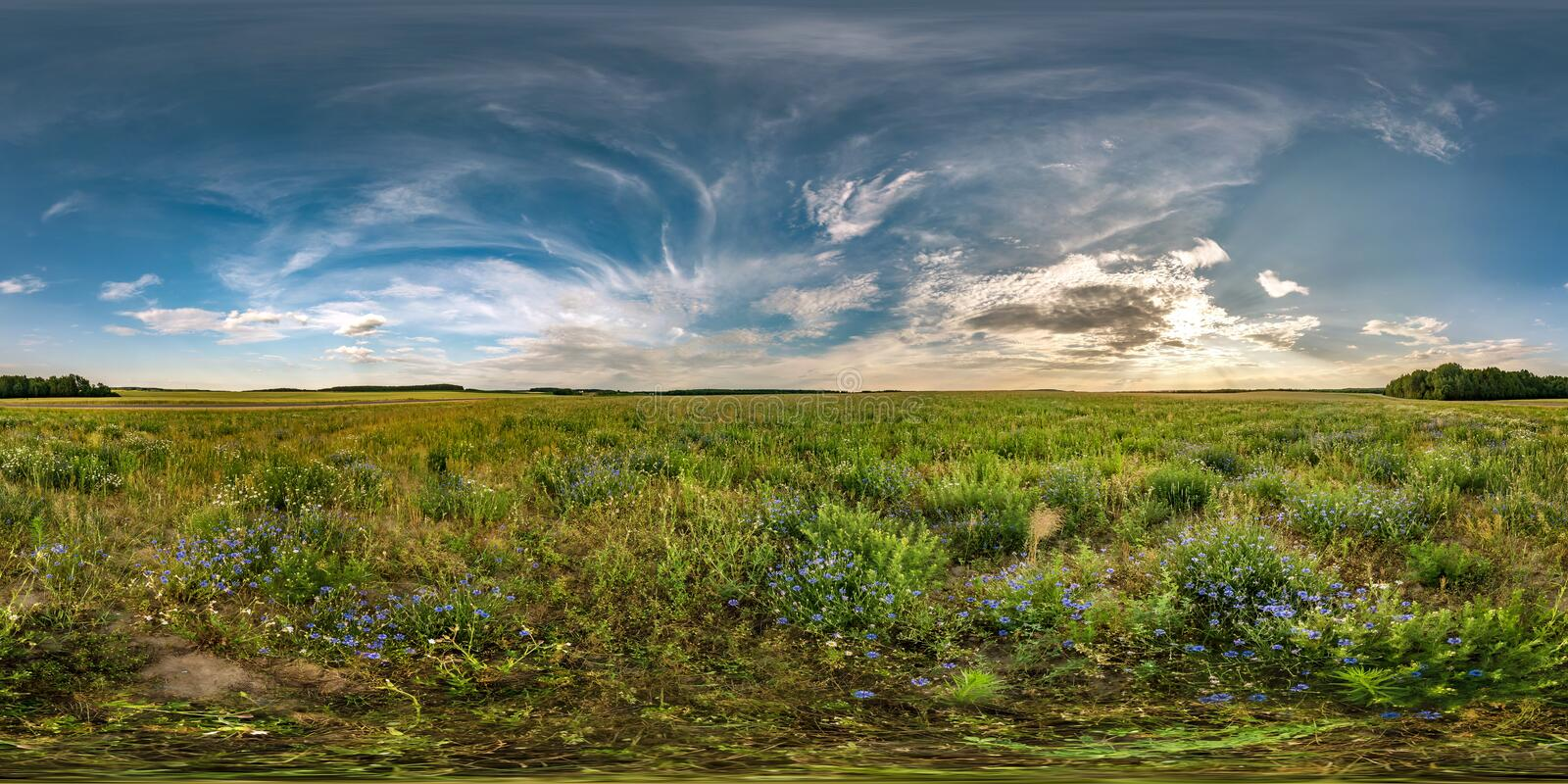 Full seamless spherical hdri panorama 360 degrees angle view among cornflowers fields in summer evening sunset with beautiful. Clouds in equirectangular stock images