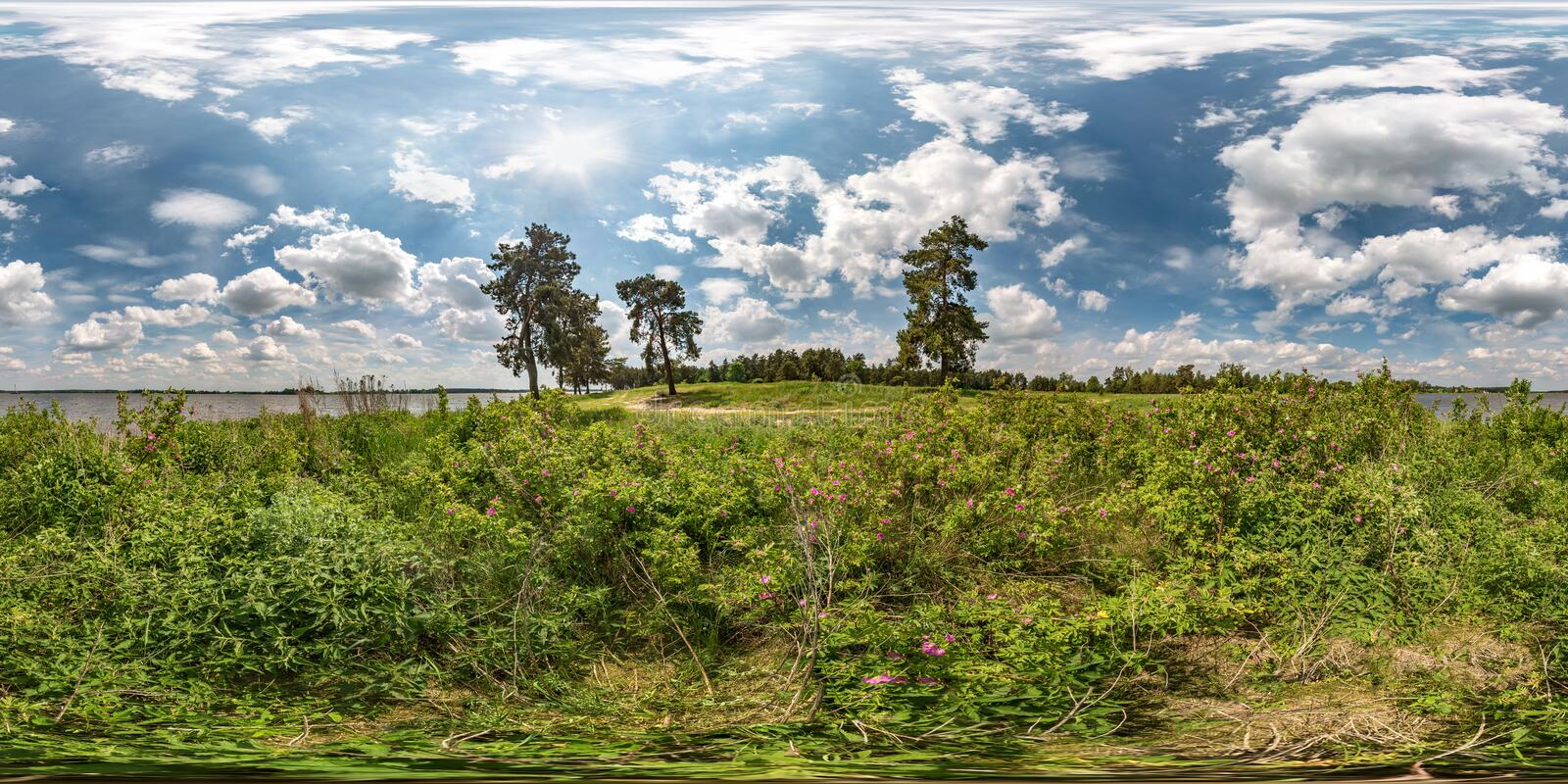 Full seamless spherical hdri panorama 360 degrees angle view on grass coast of huge lake or river in dog roses bushes  and windy. Weather with beautiful clouds royalty free stock photos