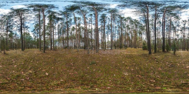 Full sfärisk hdripanorama 360 grader vinkelsikt på den fot- vandringsled- och cykelgrändbanan i pineryskog in arkivbild