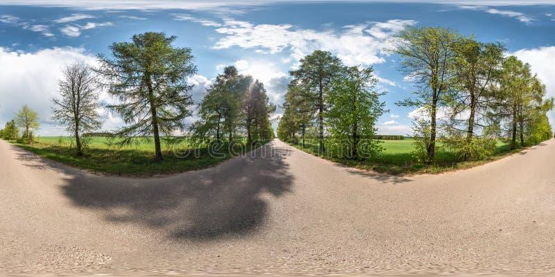 Full sfärisk sömlös panorama 360 grader vinkelsikt på ingen trafikasfaltväg bland gränden av lärkträd och fält med arkivfoto