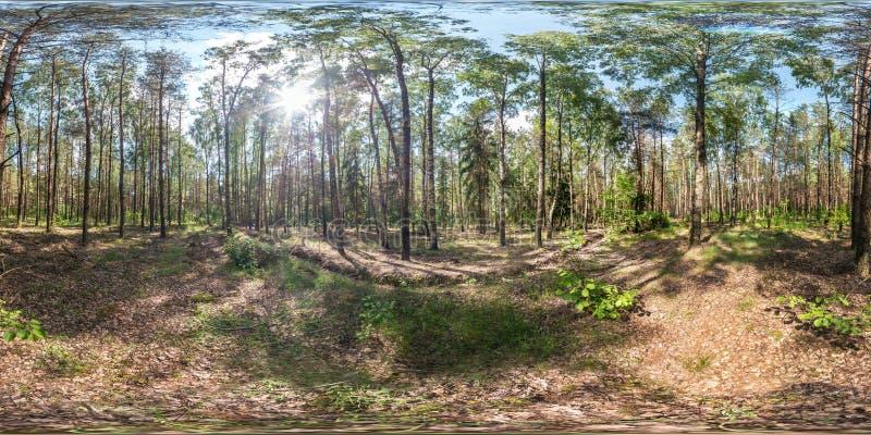 Full sf?risk hdripanorama 360 grader vinkelsikt p? f?r vandringsled- och cykelgr?nd f?r grus den fot- banan i pineryskog i soligt royaltyfri bild