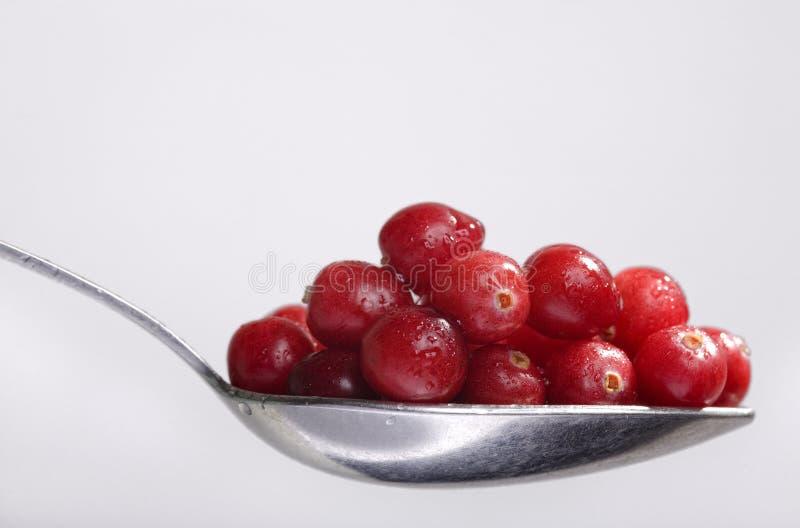 full sked för cranberry arkivfoton