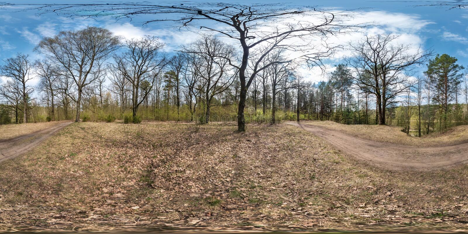 Full spherical hdri panorama 360 degrees angle view on gravel pedestrian footpath and bicycle lane path in pinery forest near huge. Oaks in sunny spring day in stock photography