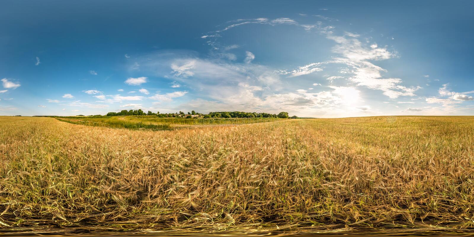 Full spherical seamless hdri panorama 360 degrees angle view among ears of barley, rye and wheat fields in evening sunset with. Clouds in equirectangular royalty free stock photography