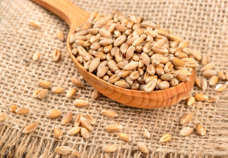 Full spoon of wheat grains stock image