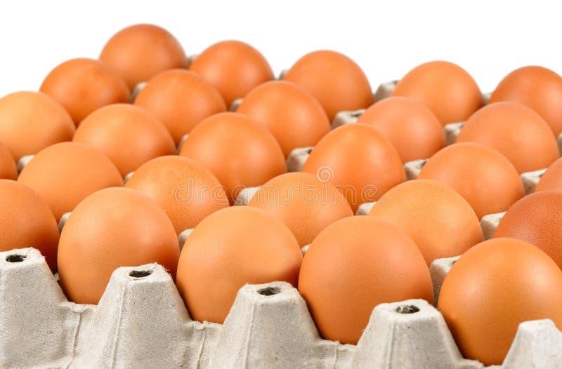 Full tray of freshly laid free range organic eggs.  stock photo