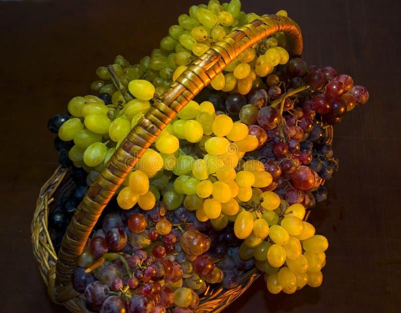 fulla druvor för korg royaltyfri bild